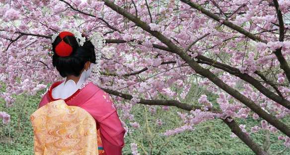 Remote Lands Japan